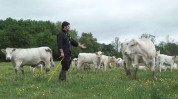 L'appel de la FNB aux éleveurs pour qu'ils s'impliquent plus dans leur filière