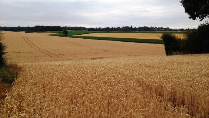 Retrouvez tous les prix du foncier agricole 2015 en région Centre