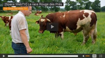 La Rouge des Prés, une race qui protège sa viande et son terroir