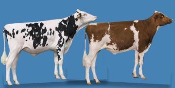 E-Semin a l'intention «d'uberiser» le marché de la semence bovine
