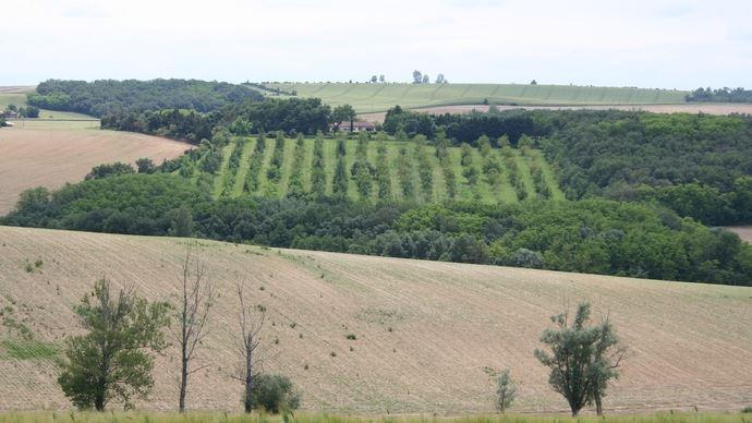 Une vente entre amis échappe au droit de préemption accordé aux Safer sur les terrains agricoles.