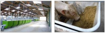 Des auges peseuses pour calculer l'efficience alimentaire des bovins viande