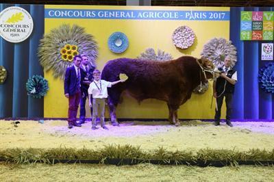 Géant, grand champion lors du salon à Paris, vient du Gaec des Myosotis (15).