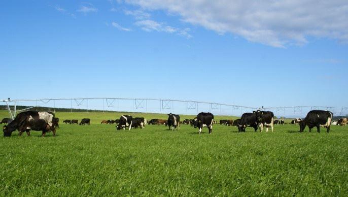 En Nouvelle-Zélande, les producteurs laitiers doivent faire face à des difficultés croissantes, notamment en matière environnementale et d'endettement.