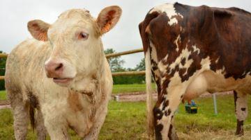 Quatre éleveurs sur dix ne connaissent pas leur coût de revient
