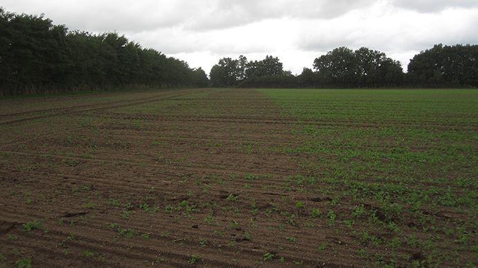 A gauche: herbicide appliqué avant la pluie. A droite: herbicide appliqué en post-précoce après la pluie