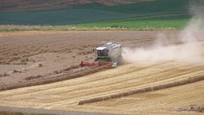 Moisson de blé
