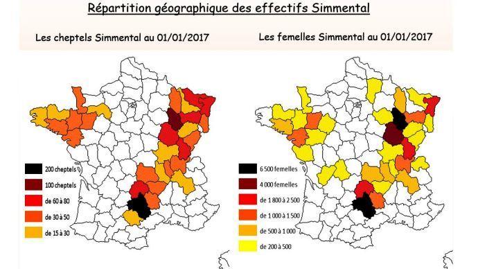 La répartition géographique des simmentals en France