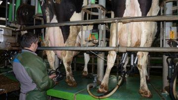 La hausse du prix du lait se confirme grâce à l'augmentation de la demande