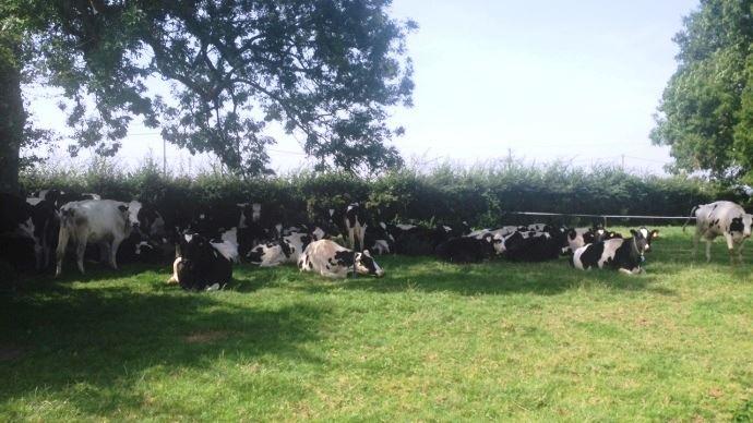 82,6% des éleveurs estiment que la chaleur a pénalisé leur production