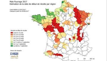Arvalis précise ses estimations de dates d'ensilage dans chaque région