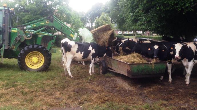 Le printemps sec a limité la pousse des pâtures ce qui oblige les éleveurs à complémenter les animaux aux champs mais cela pénalise leurs stocks de fourrages qui s'avérera insuffisant pour un tiers des éleveurs selon un sondage sur Web-agri