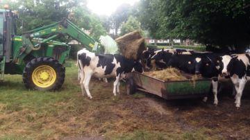 37,8% des éleveurs manqueront de stock cette année