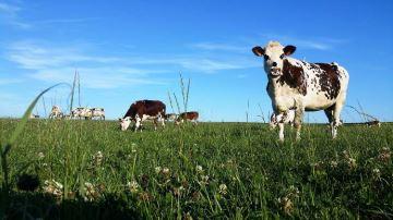 Améliorer, regarnir ou rénover ses prairies