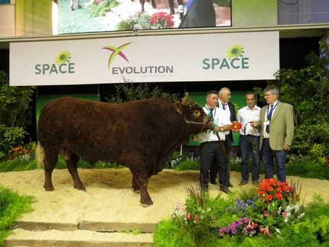 Jongleur, champion mâle Salers au Space 2017.