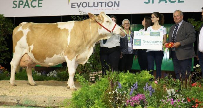 Daphnée (Bosna x Rumba), meilleure vache en cours de 4ème lactation ou plus