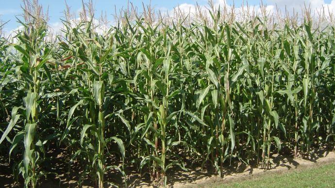 Les conditions climatiques favorisent l'avancée des récoltes