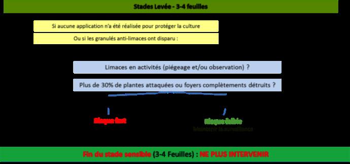 Le risque limace au stade 3-4 feuilles de la céréale.