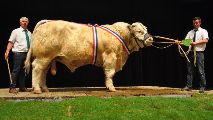 Héracles RVS (Exelent MS x Demoiselle) champion mâle au Gaec Micaud (89)