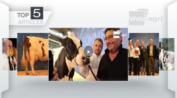 Les concours bovins du Sommet de l'élevage à l'honneur sur Web-agri