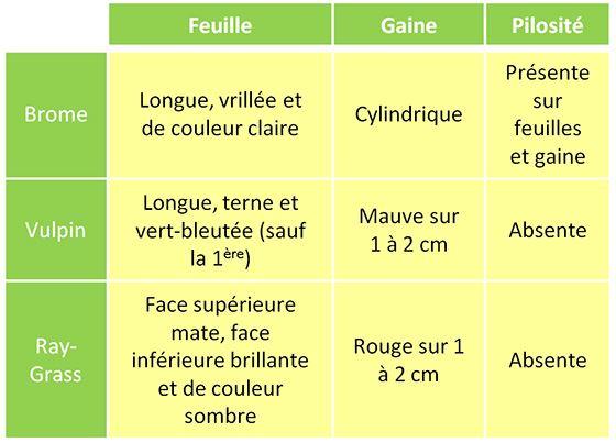 Tableau 1: Synthèse des principales caractéristiques des espèces de brome, vulpin et ray-grass au stade plantule