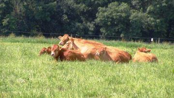 Produire de la viande grâce à une bonne gestion de l'herbe
