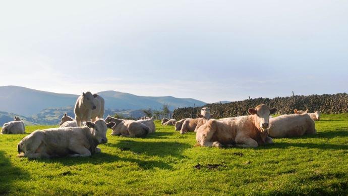 Easy viande a pour but d'augmenter les performances des bovins viande en diminuant leur impact environnemental