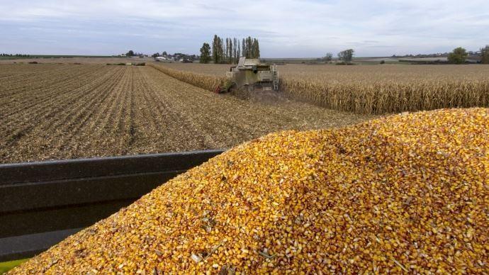 Le rendement moyen 2017 en maïs grain devrait s'élever à 103q/ha selon Arvalis-Institut du végétal, soit le troisième meilleur rendement de ces dernières années..
