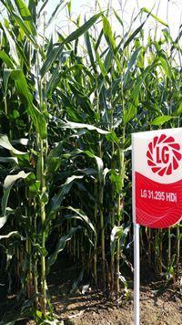 Hybride de maïs HDi LG