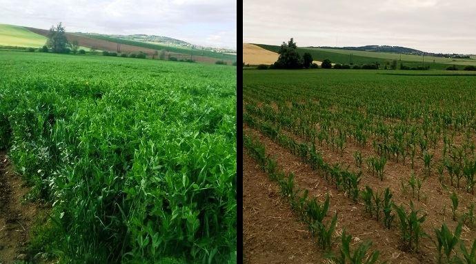 L'itinéraire en double culture méteil + maïs est souvent mis en oeuvre dans les meilleures parcelles. Le choix de l'indice de précocité se fera en fonction des maïs semés plus précocemment dans la saison.