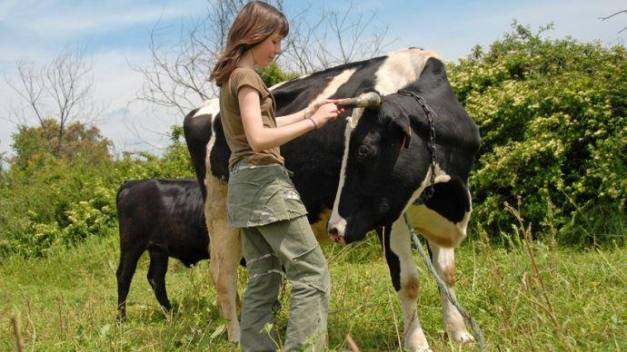 Jeune fille avec sa vache