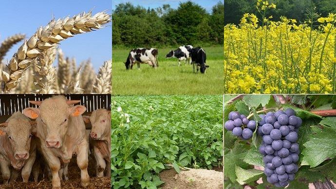 Si certains secteurs agricoles reprennent pied en 2017, comme les céréales, le lait ou la viande, l'année n'a pas été bonne pour la viticulture et les pommes de terre. (©Terre-net Média)