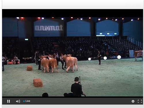 Live des concours de Swiss Expo 2018