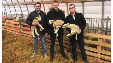 «Les Ovinpiades pour promouvoir lemétier d'éleveur ovin»