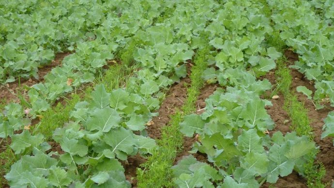 Actualit agricole march s et prix agricoles for Plante kefir