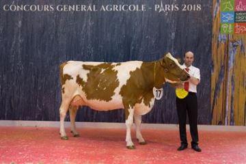 Palmarès du concours Pie rouge: Hortensia arrive première, comme une fleur
