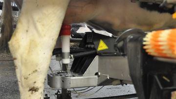 60% des éleveurs laitiers ne franchiraient pas le cap du robot