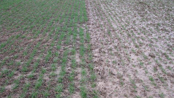 Différence entre une parcelle en SDSC et une parcelle en système conventionnel après une pluie