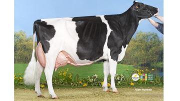 Michard Escale, la première vache pointée EX-97