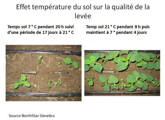Effet température du sol sur la qualité de la levée