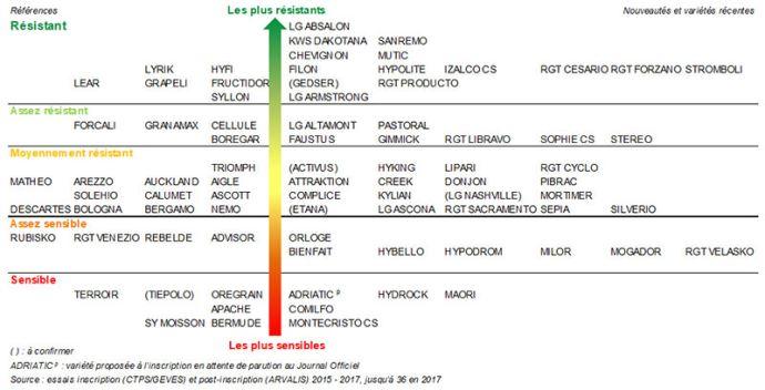 Résistances des variétés de blé tendre à la septoriose (Septoria tritici)