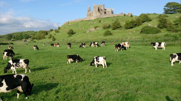 41% des exportations agroalimentaires de l'Irlande partent vers le Royaume-Uni.