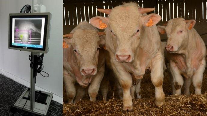 Cet'automatique contrôlele bon étourdissement des animaux à l'abattoir grâce à ses technologies qui déclenchent le réflex cornéen des animaux