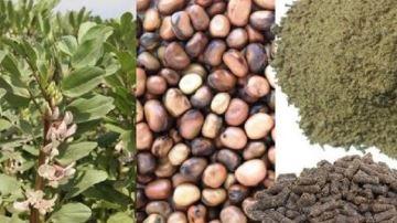 La technologie Prodival améliore la valorisation des graines protéagineuses