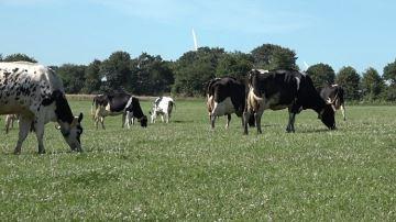 Le «lait de foin» : une aubaine pour les éleveurs laitiers pâtureurs