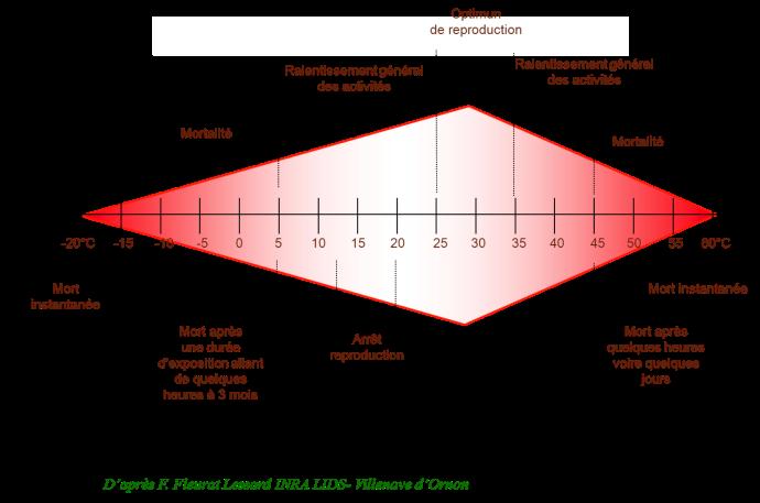 Diagramme de développement des insectes en fonction de la température