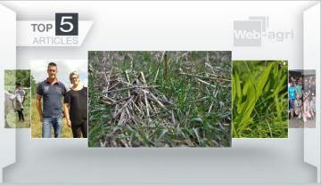 Couverts végétaux et fourrages à l'honneur sur Web-agri