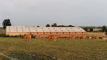 8 repères pour bien choisir la couverture de son bâtiment d'élevage