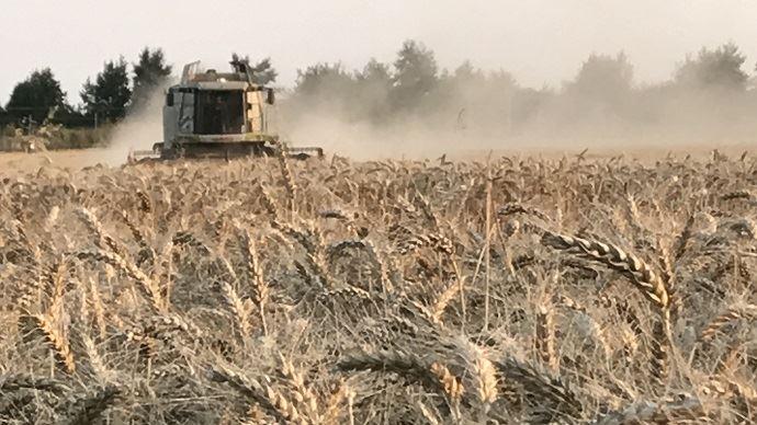 La sécheresse qui a sévit cet été - et qui sévit encore - les pays du Nord de l'Europe, a fortement impacté la production de grains.