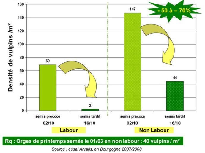 Effet de la date de semis sur vulpins - Diénay (21) - 2007-2008